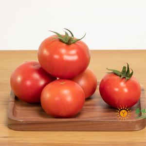 (3.8限1份)日本柿子番茄(约1斤)