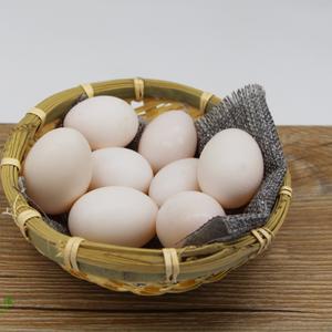 原粮鸽子蛋 10/盒