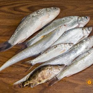 江水野生杂鱼
