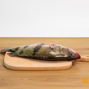 茅山水库野生鳜鱼