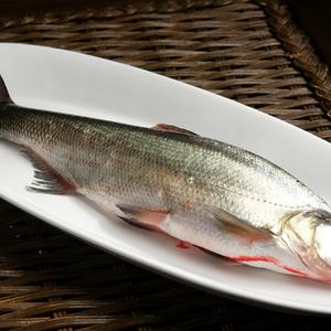 茅山水库野生翘嘴白鱼