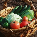 无农药蔬菜套餐 三人单月(48斤)