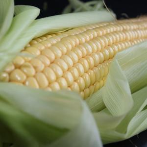 有机白糯玉米