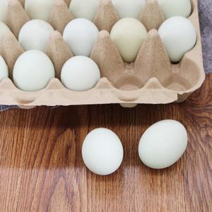 发酵床散养草鸡蛋 15/盒 绿壳