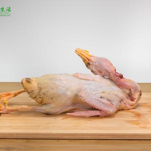 河边散养2年老麻鸭 3.0~3.5斤