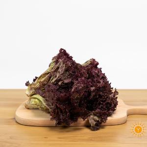 无公害紫叶生菜