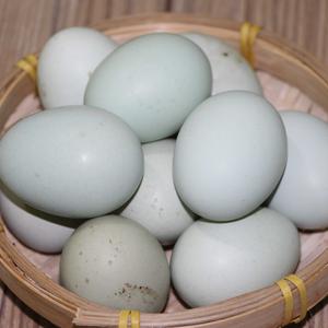 发酵床草鸡初生蛋