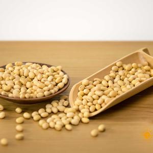 非转基因黄豆
