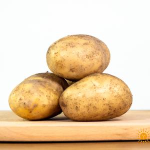 无公害土豆