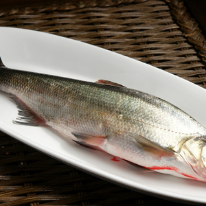 江水野生翘嘴白鱼