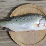 外江野生鲈鱼