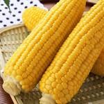 无农药糯玉米