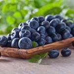 布丽吉塔无籽蓝莓