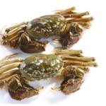 水库野生大闸蟹(公) 公蟹 3两