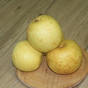 安全种植翠冠梨