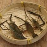 水库野生青虾