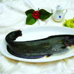茅山水库野生鲶鱼
