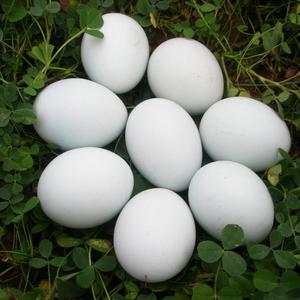 原粮散养草鹅蛋(1枚)