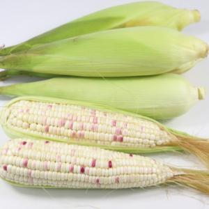 无公害糯玉米(1斤)