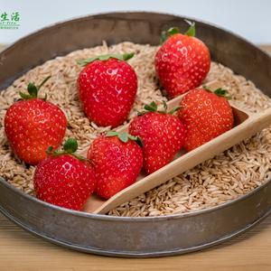 无农药容莓3号(2斤)
