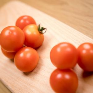 无农药小红番茄