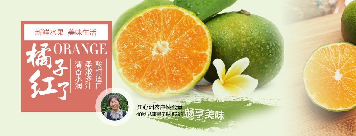 江心洲宫川蜜橘