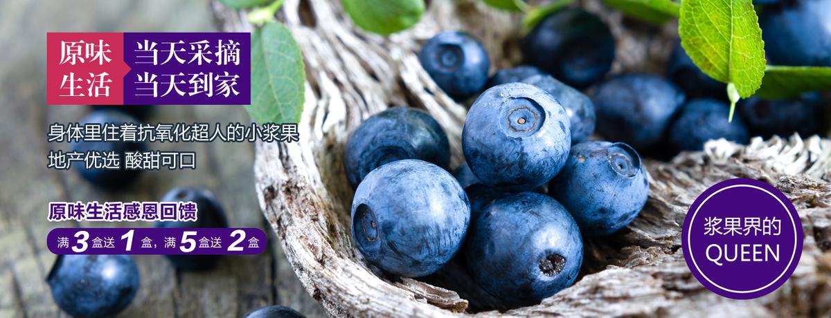 高品质超实惠的本地蓝莓