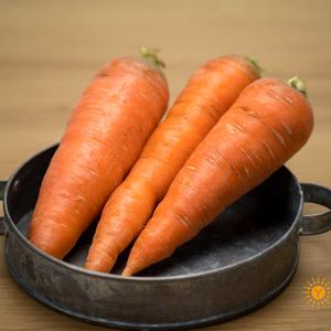 无农药胡萝卜